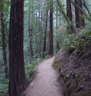 forest-path-cropped
